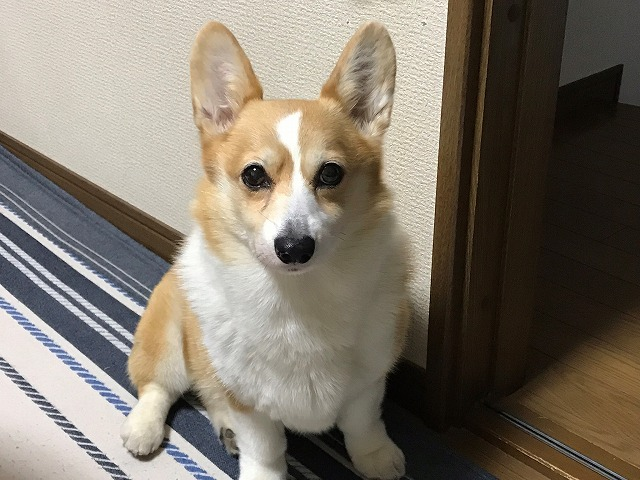子犬.jpg